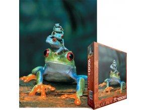 Červené oči žabiček (Red Eyed Tree Frog)