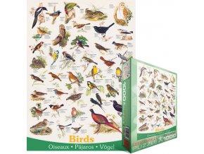 Ptáci (Birds)