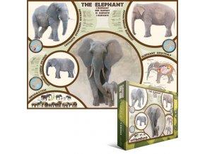 Slon (Elephant) - popisky v angličtině