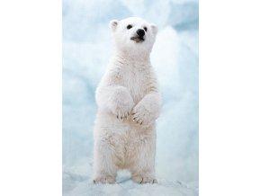 Svět přírody: Lední medvídě - 250 dílků
