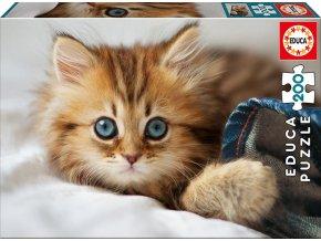 Modrooké kotě