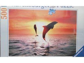 Skákající delfíni