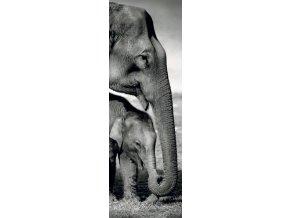 Sloni - vertikální