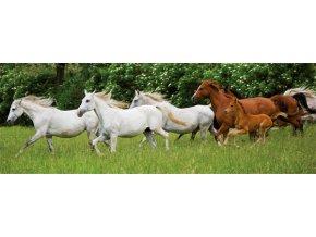 Běžící koně - panoramatické - 150 dílků