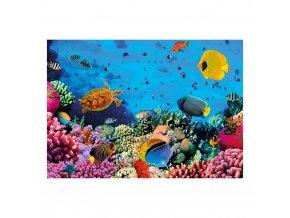 Korály - život pod mořem