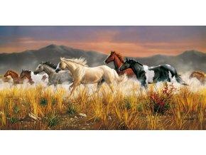 Divocí koně - HQC