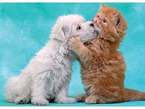 Pusy a něha (Štěně a kotě)