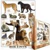 Velké kočky (Big Cats)