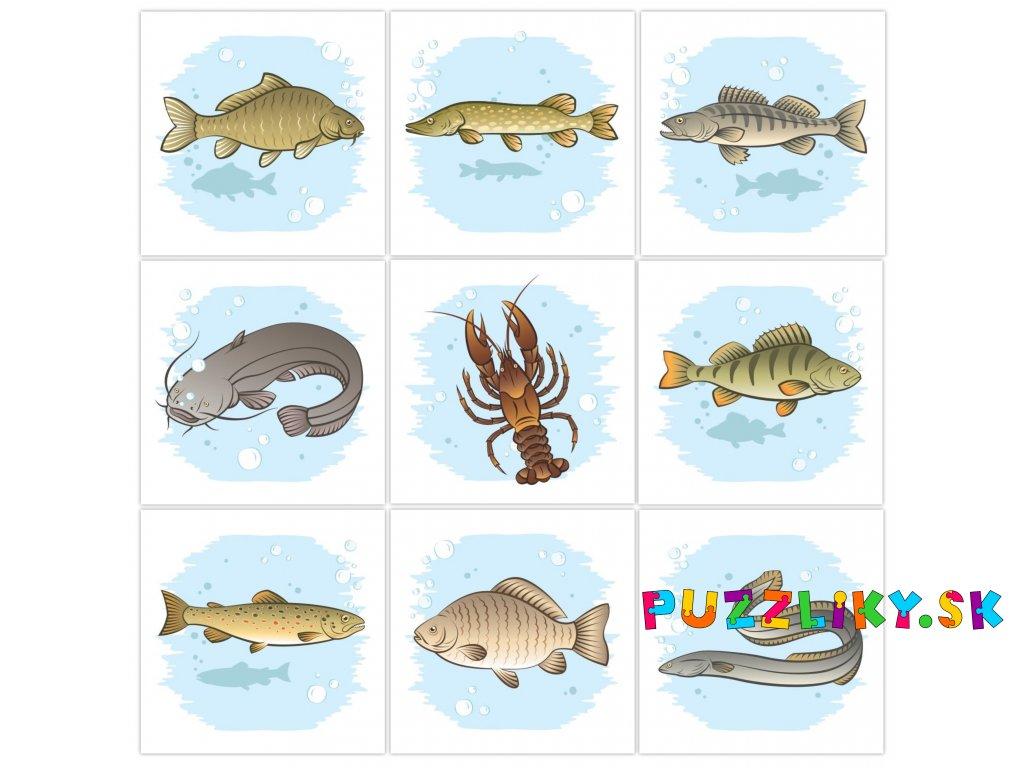 Poznávame ryby okolo nás - bavlnené kartičky