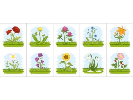 Poznávame kvety okolo nás - bavlnené kartičky