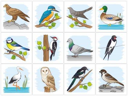 Poznávame vtáky okolo nás - bavlnené kartičky