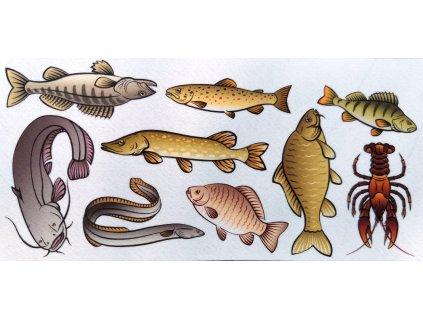 Chytáme a poznávame ryby - plstený panel
