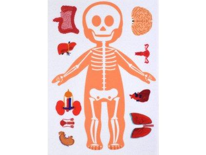 Ľudské telo - kostra a orgány - plstený panel