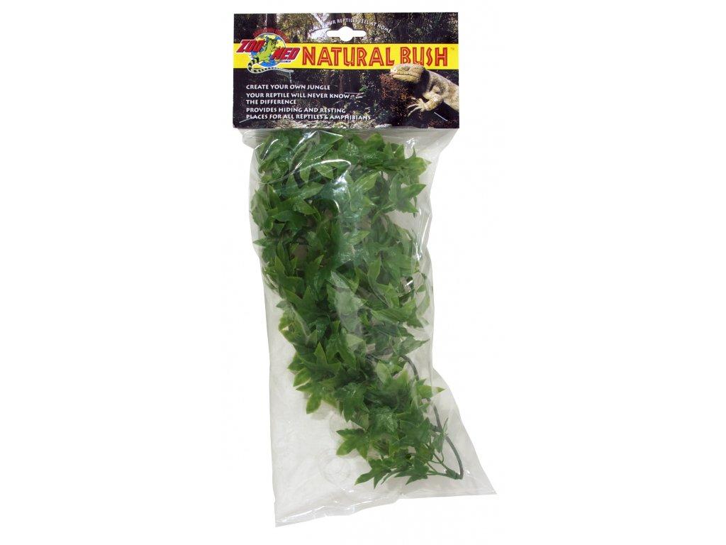 Terarijní rostlina ZMD Congo Ivy S