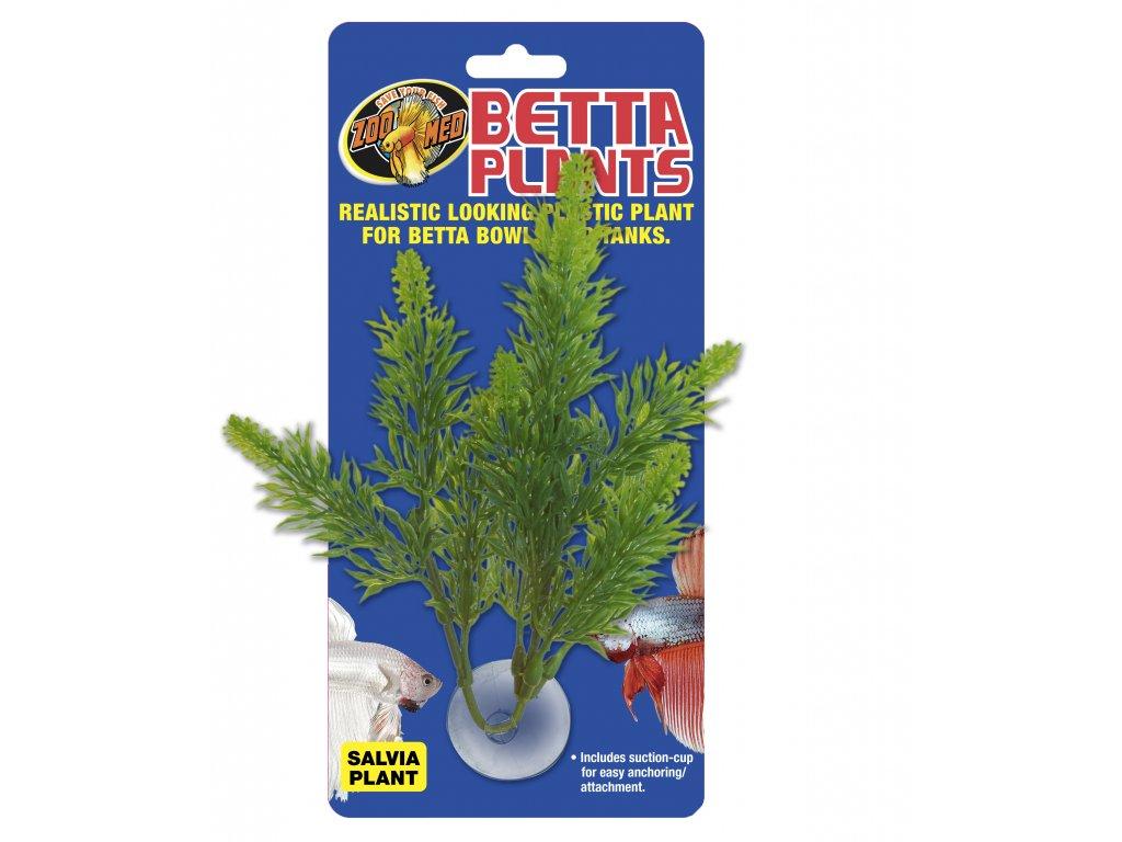 Betta Plant – Šalvěj