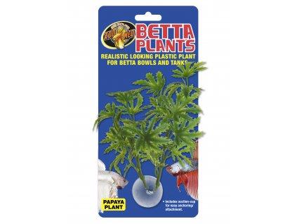 Betta Plant – Papája
