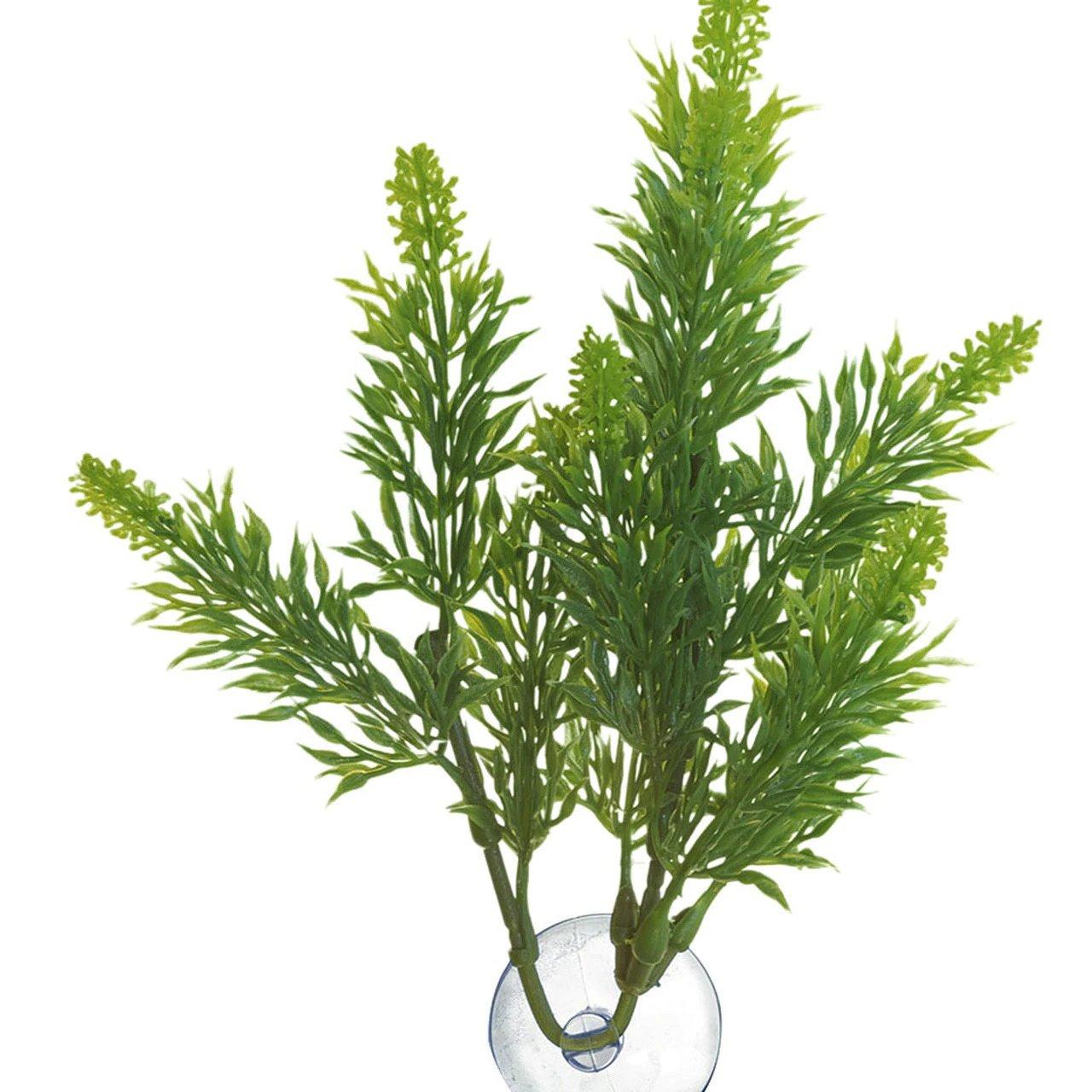 Zoomed Malaysian Fern – Přírodní keřová rostlina L