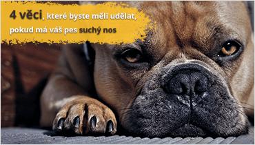 4 věci, které byste měli udělat, pokud má váš pes suchý nos