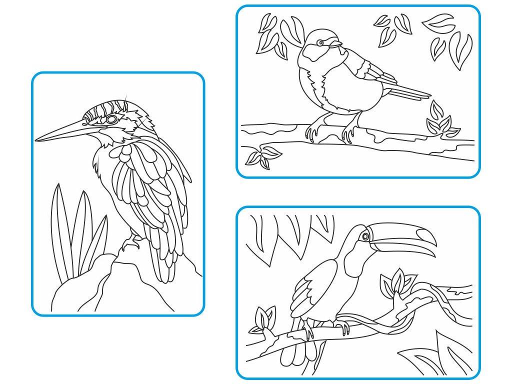 zakladni-sada-ptaci-barevne-piskovani-obrazků-radost-v-pisku