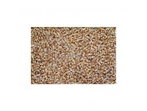 Pšenice, 50 kg
