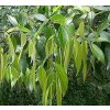 Cejlonská skořice, 500 g