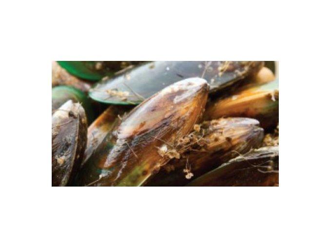 Mušle drcená - Green-lipped Mussel