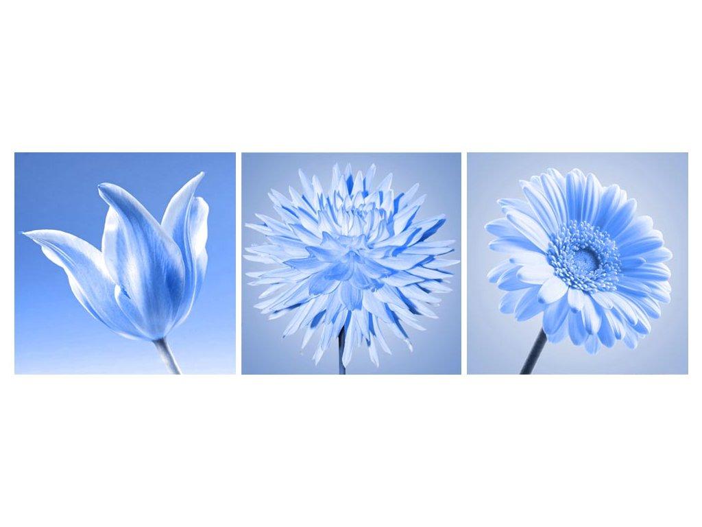 foto obraz modry kvet