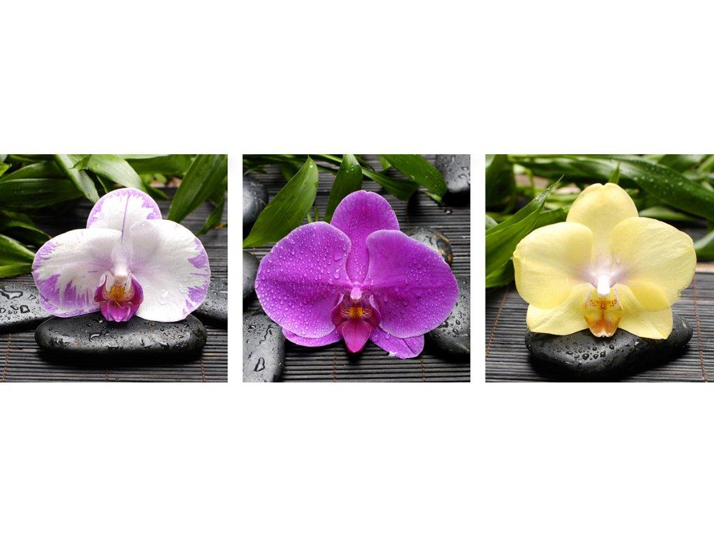 tri kvety