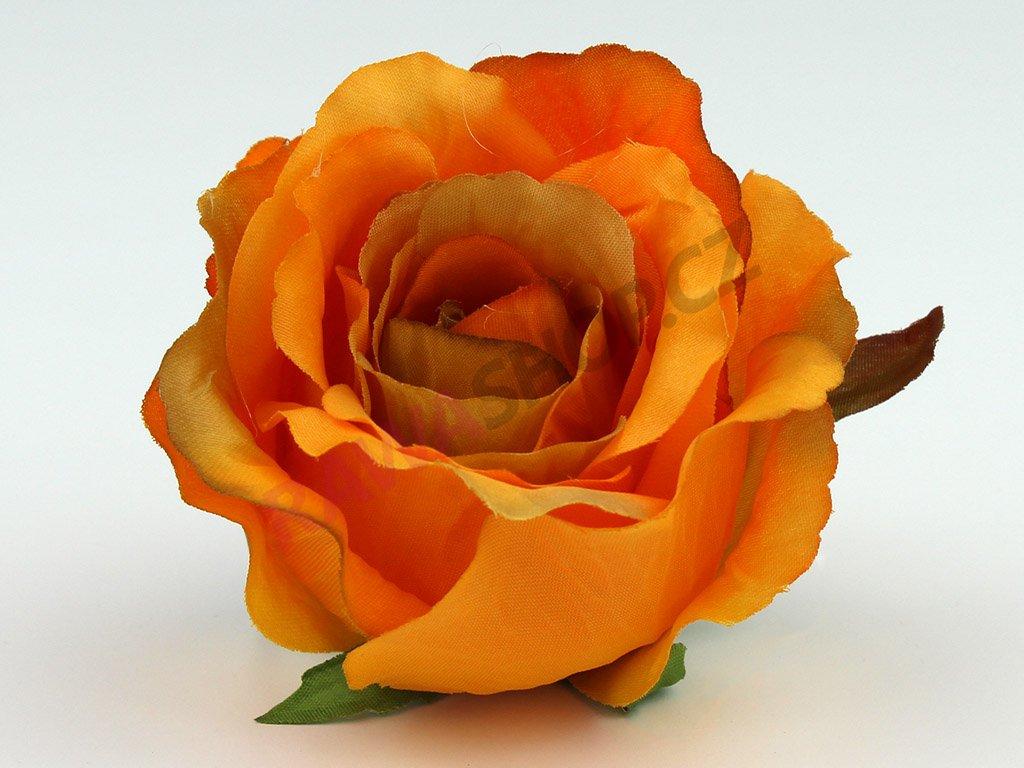 Růže 23069 - rudá