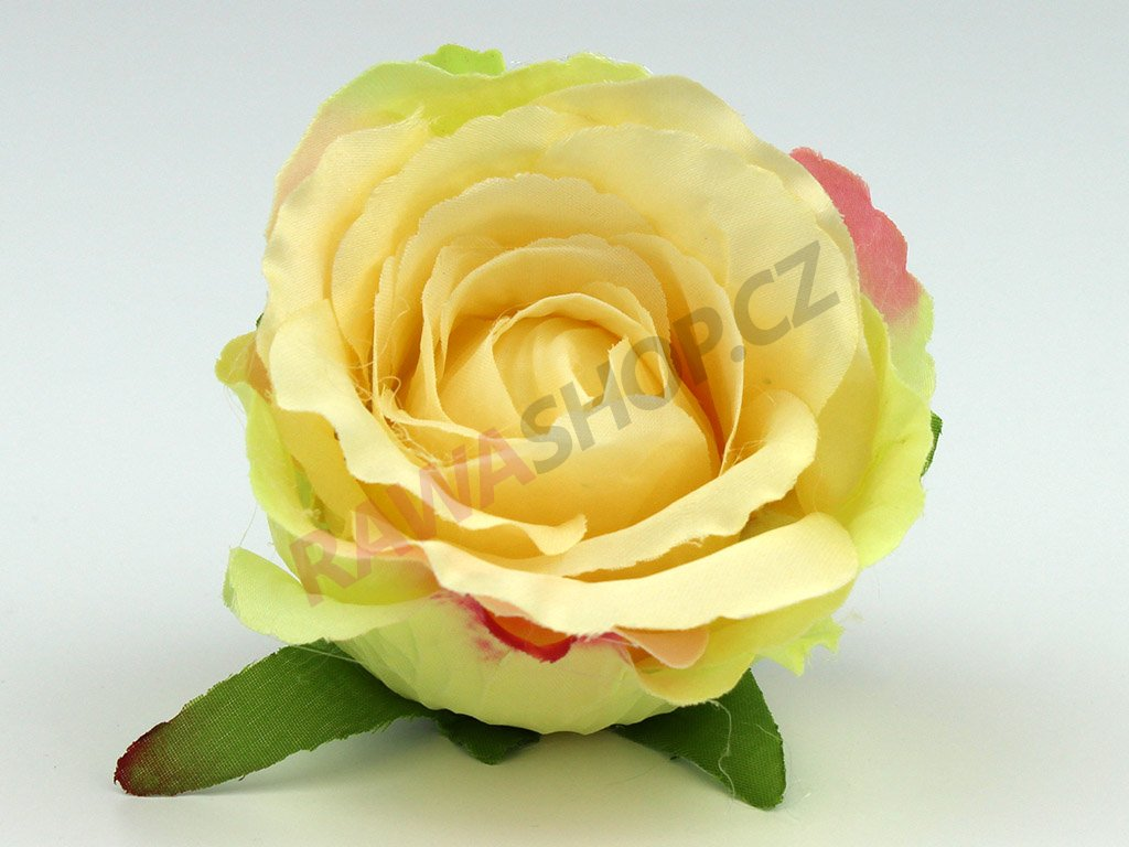 Růže 23069 - ekry/růžová