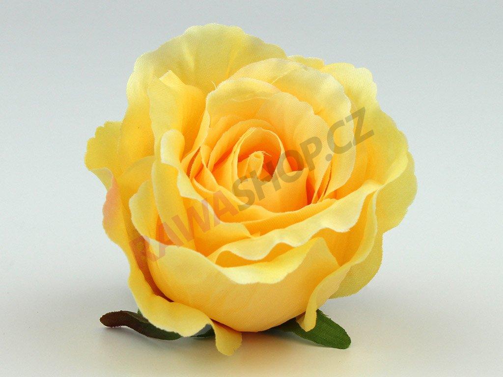 Růže 23069 - slunečná