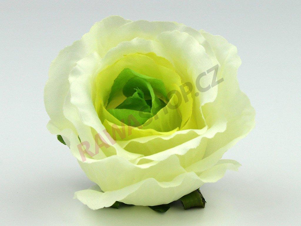 Růže 23069 - krémová/zelená
