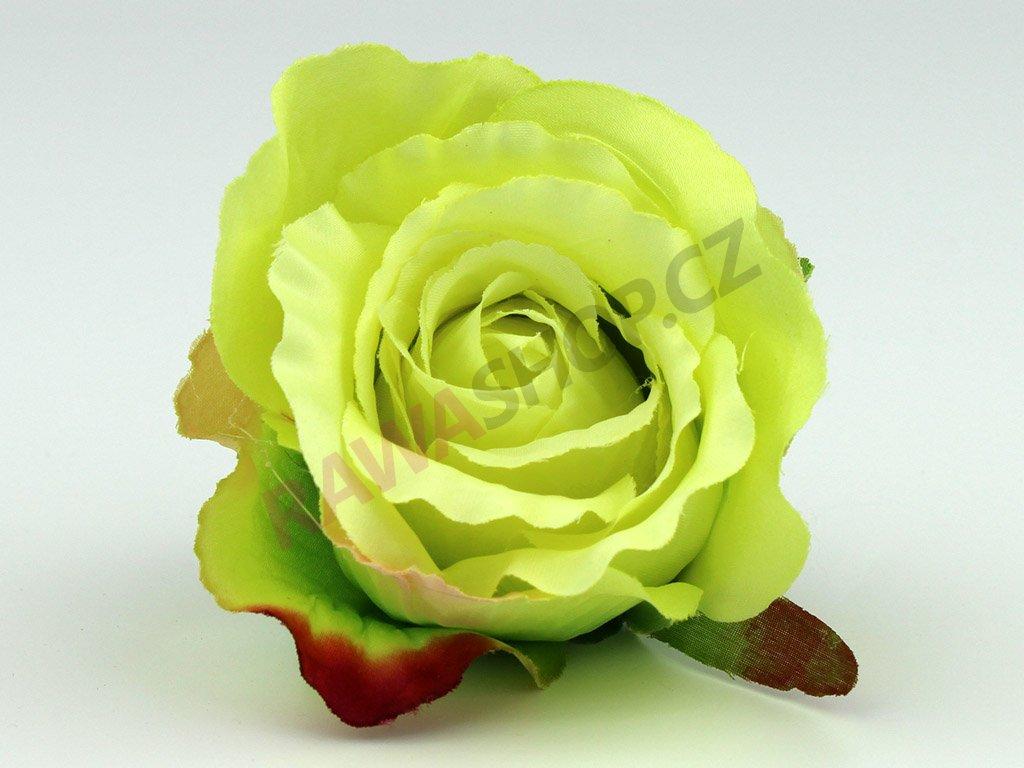 Růže 23069 - světle zelená/pistáciová