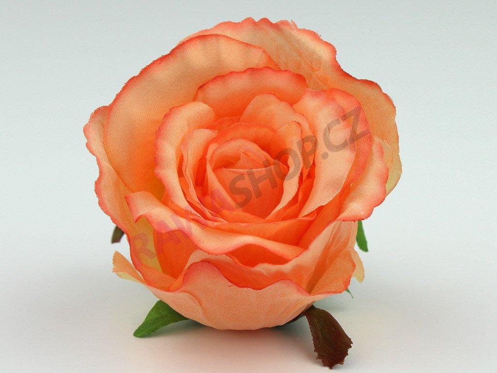 Růže 23069 - sonia