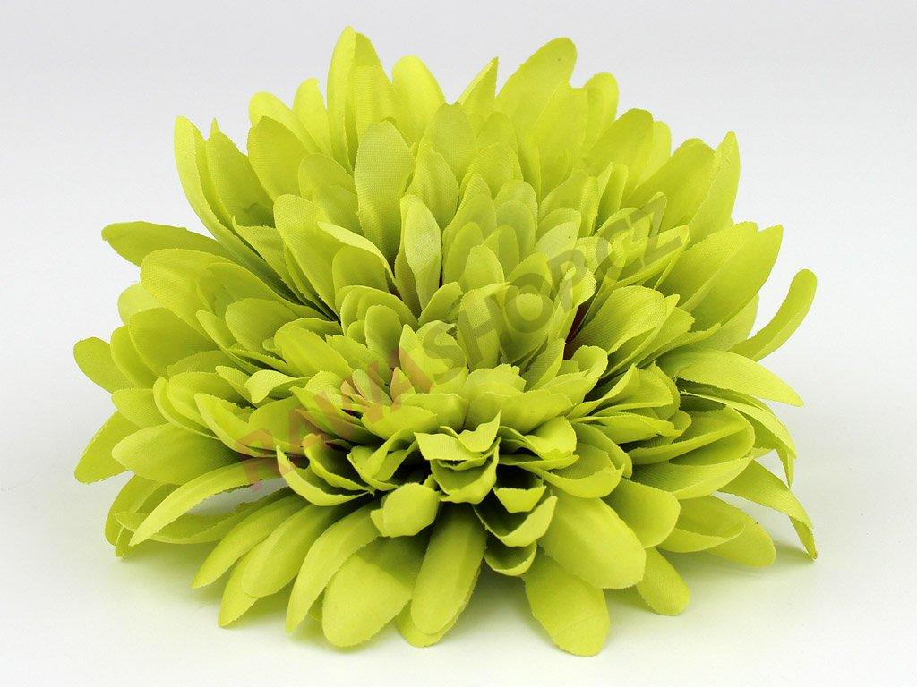 Chryzantéma 23113 - zelená