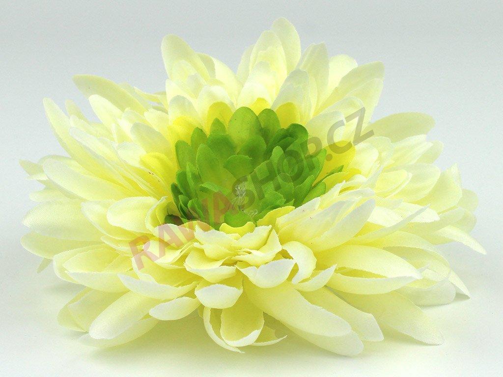 Chryzantéma 23113 - ekry/zelená