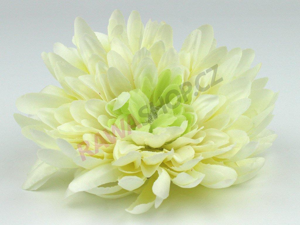 Chryzantéma 23113 - světle krémová/zelená
