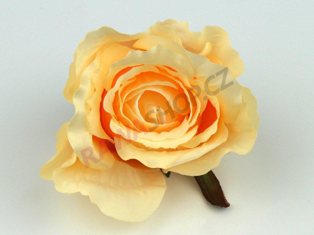 Růže 23069 - tmavý losos