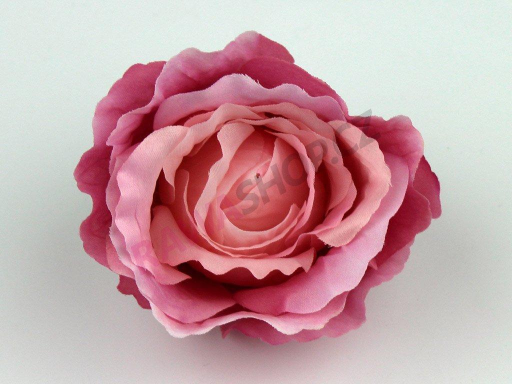 Růže 23069 - tmavá růžovo krémová