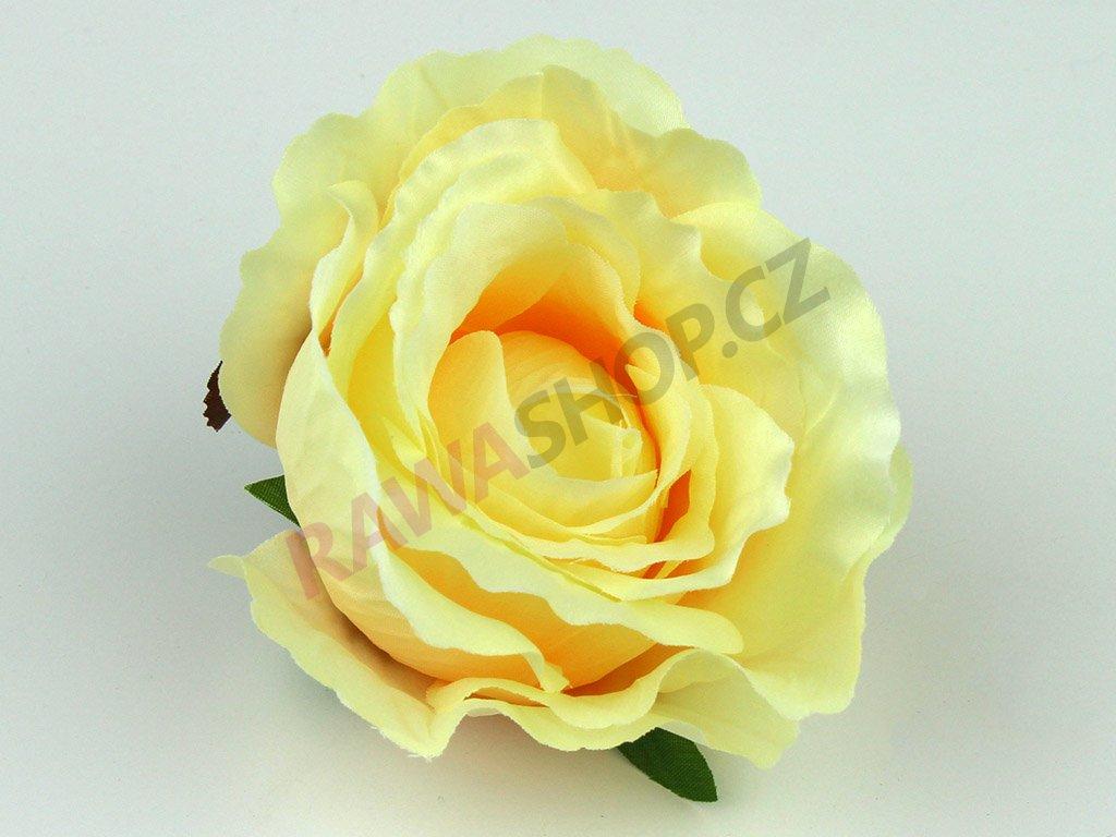 Růže 23069 - světle žlutá