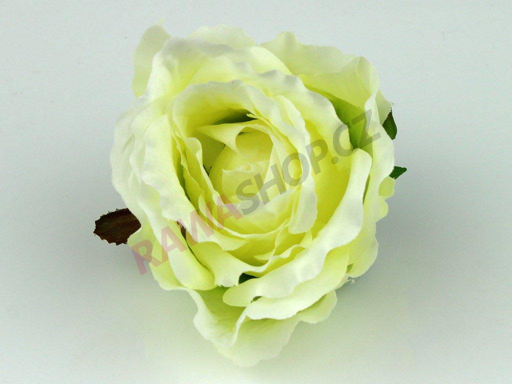 Růže 23069 - pistáciová