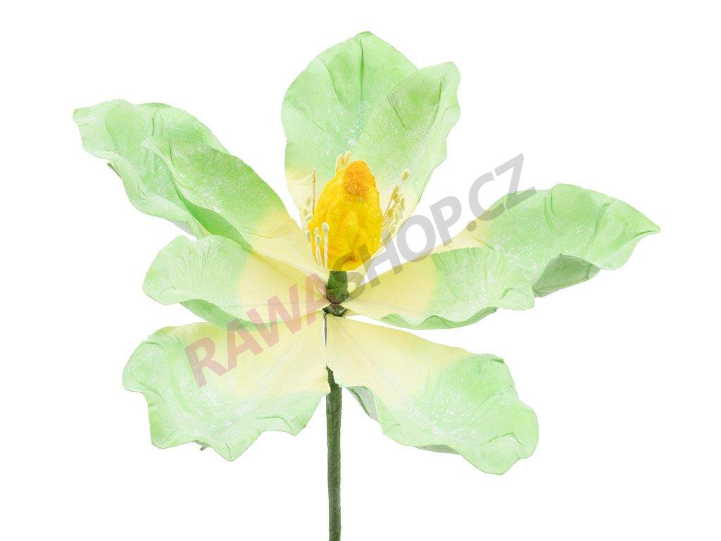Latexová květina - zelená