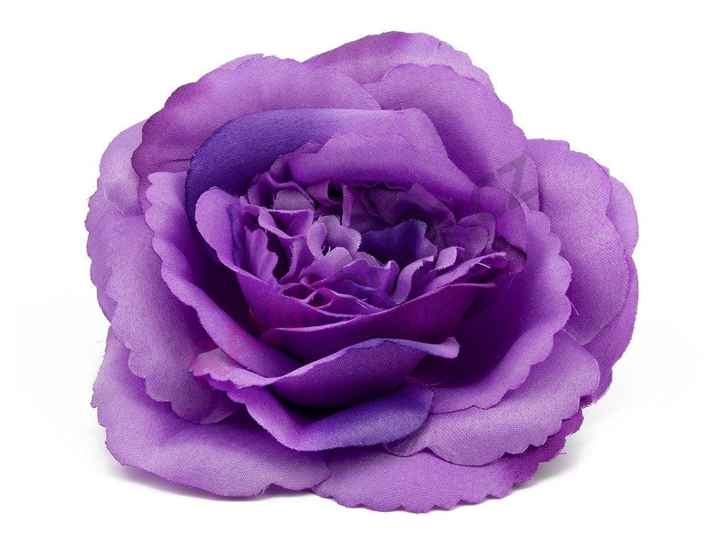 Růže 996 - levandule