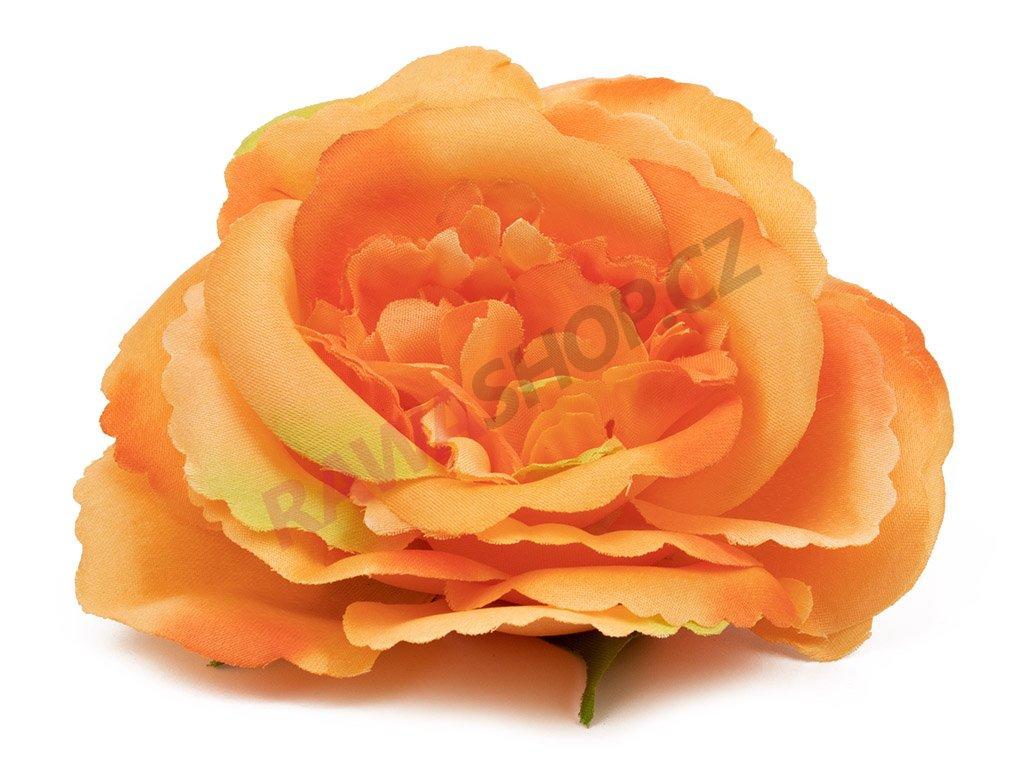 Růže 996 - oranžová