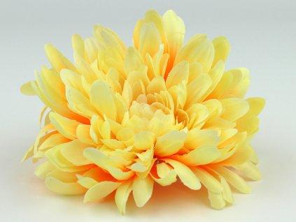 Chryzantéma 23113 - světle žlutá/rudá