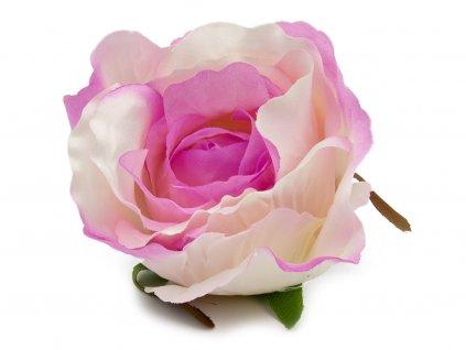 Růže 23069 - bílo fialová