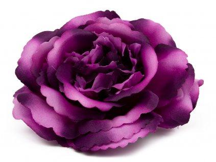 Růže 233 - fialová