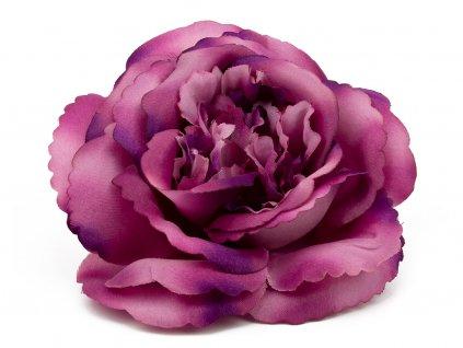 Růže 233 - fialový vřes
