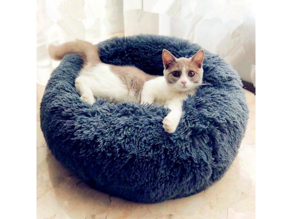 kočka11