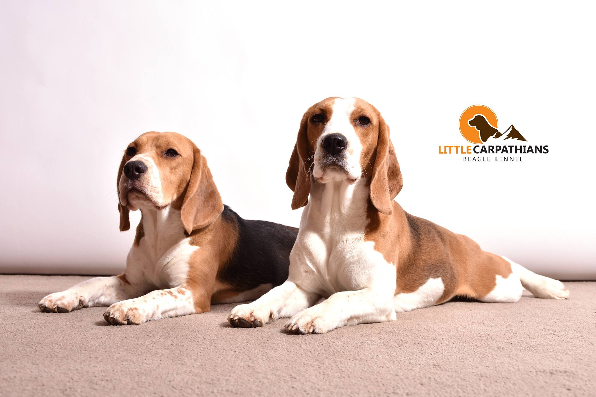 Little Carpathians | Beagle Kennel